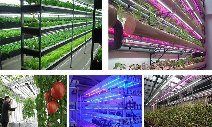 grow light application