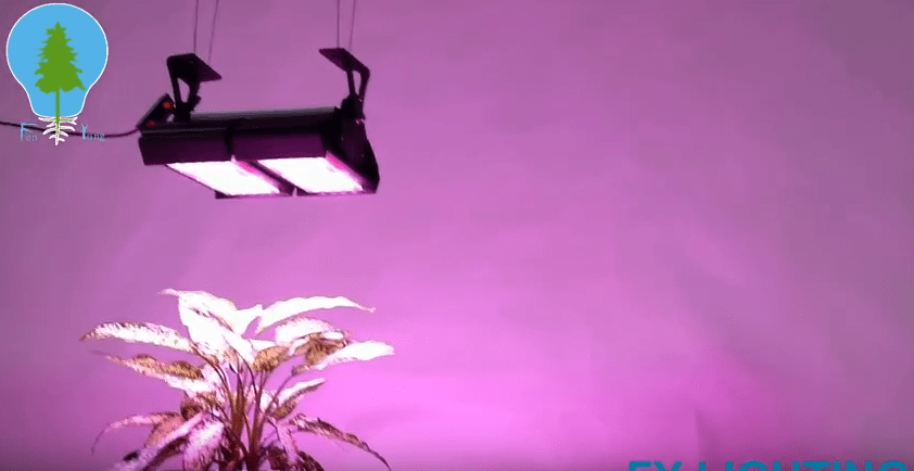 FY LIGHTING FLOOD GROW LIGHT